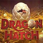 Dragon Hatch